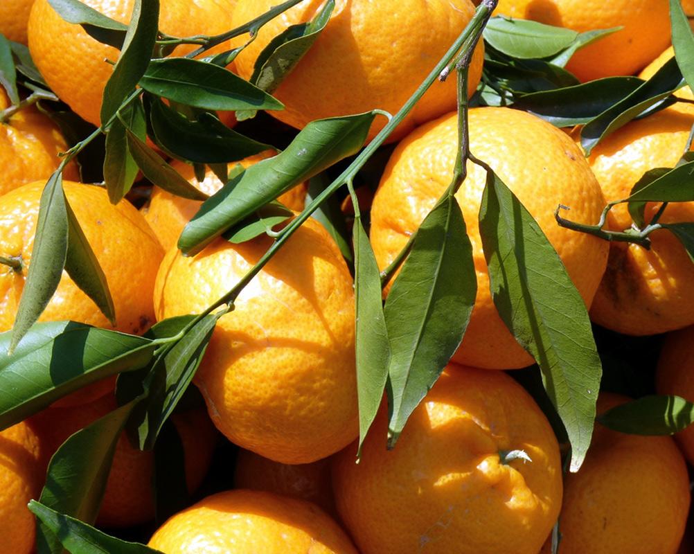 http://www.agricolagenco.it/web/wp-content/uploads/2014/04/mandarini.jpg